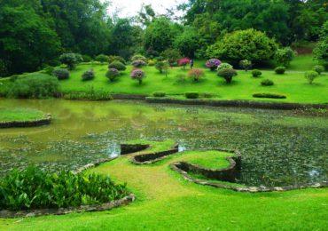 Королевский ботанический сад в Шри-Ланке