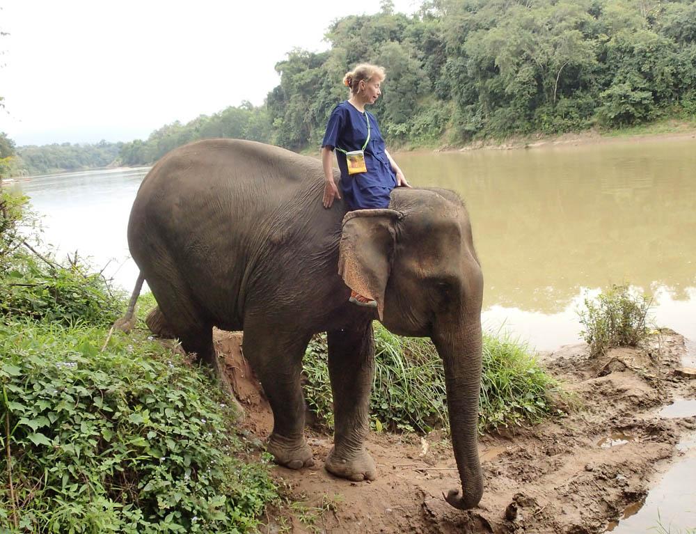 Лаос слоны дети